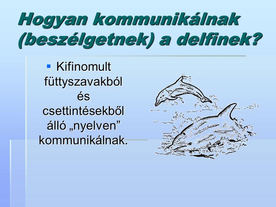 """Hogyan kommunikálnak (beszélgetnek) a delfinek?  Kifinomult füttyszavakból és csettintésekből álló """"nyelven"""" kommunikálnak."""