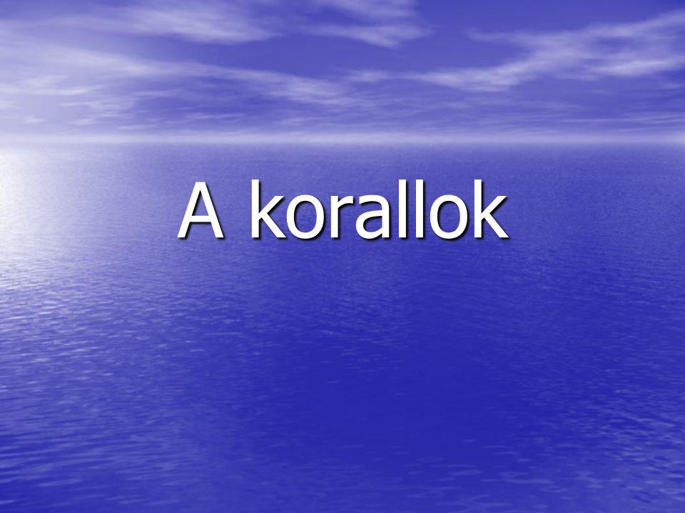 A korallok