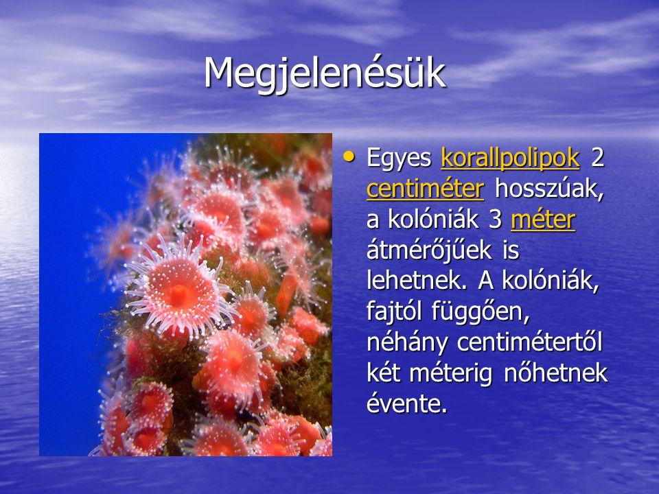 Megjelenésük Megjelenésük Egyes korallpolipok 2 centiméter hosszúak, a kolóniák 3 méter átmérőjűek is lehetnek.