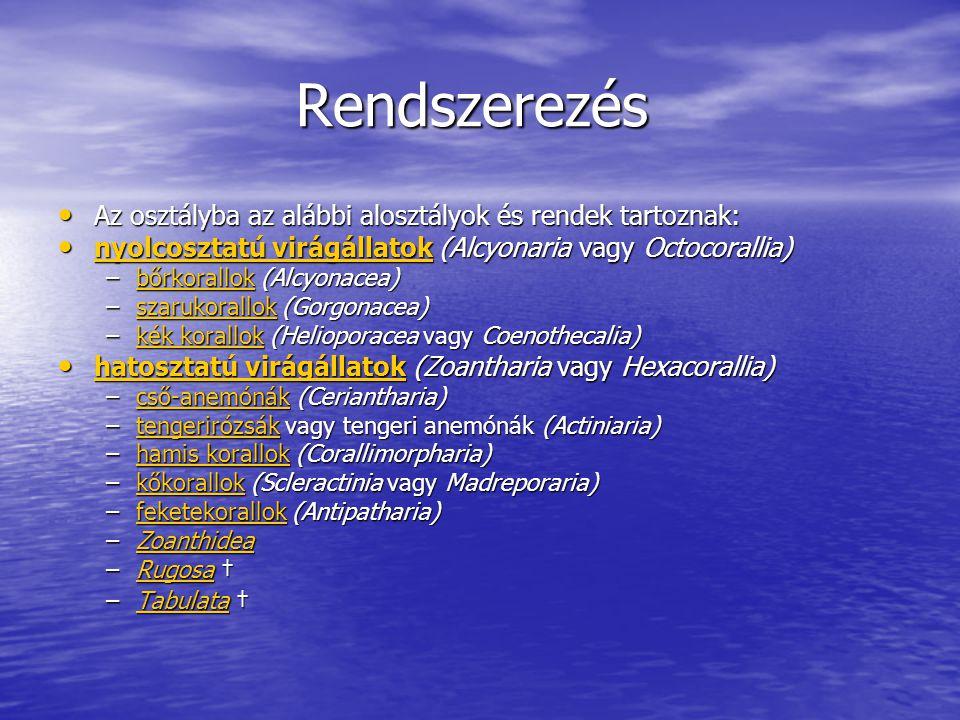 Rendszerezés Rendszerezés Az osztályba az alábbi alosztályok és rendek tartoznak: Az osztályba az alábbi alosztályok és rendek tartoznak: nyolcosztatú virágállatok (Alcyonaria vagy Octocorallia) nyolcosztatú virágállatok (Alcyonaria vagy Octocorallia) nyolcosztatú virágállatok nyolcosztatú virágállatok –bőrkorallok (Alcyonacea) bőrkorallok –szarukorallok (Gorgonacea) szarukorallok –kék korallok (Helioporacea vagy Coenothecalia) kék korallokkék korallok hatosztatú virágállatok (Zoantharia vagy Hexacorallia) hatosztatú virágállatok (Zoantharia vagy Hexacorallia) hatosztatú virágállatok hatosztatú virágállatok –cső-anemónák (Ceriantharia) cső-anemónák –tengerirózsák vagy tengeri anemónák (Actiniaria) tengerirózsák –hamis korallok (Corallimorpharia) hamis korallokhamis korallok –kőkorallok (Scleractinia vagy Madreporaria) kőkorallok –feketekorallok (Antipatharia) feketekorallok –Zoanthidea Zoanthidea –Rugosa † Rugosa –Tabulata † Tabulata
