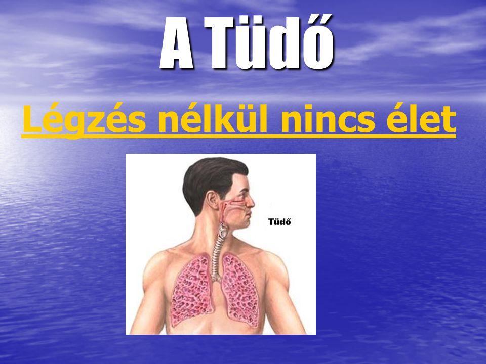 A Tüdő Légzés nélkül nincs élet