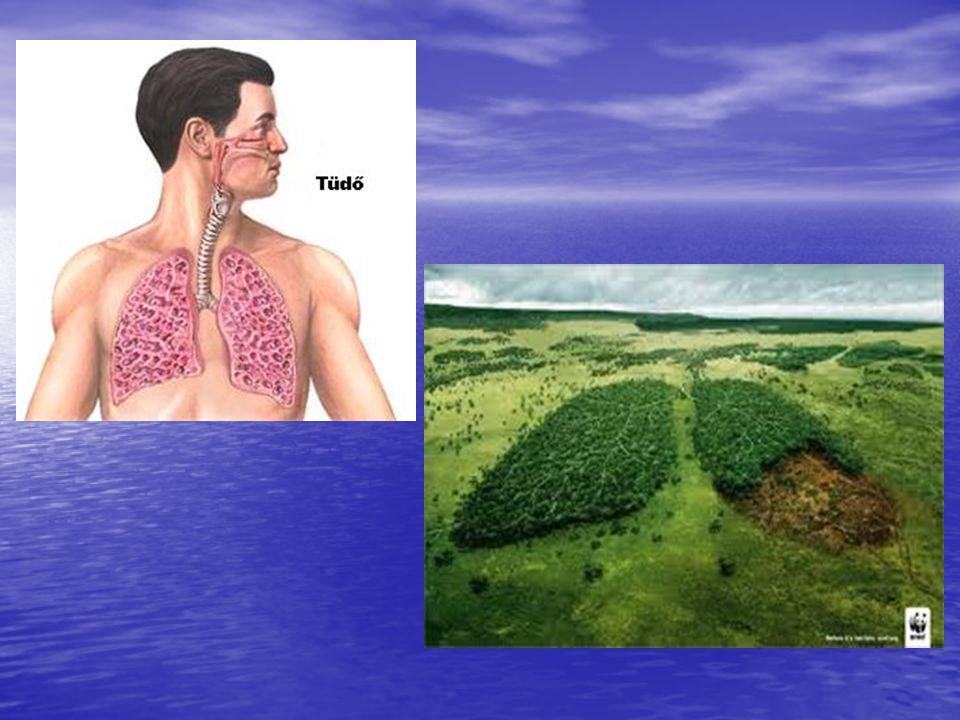 Működése Az élet fenntartásához, az anyagcsere-folyamatok lebonyolításához oxigén szükséges.