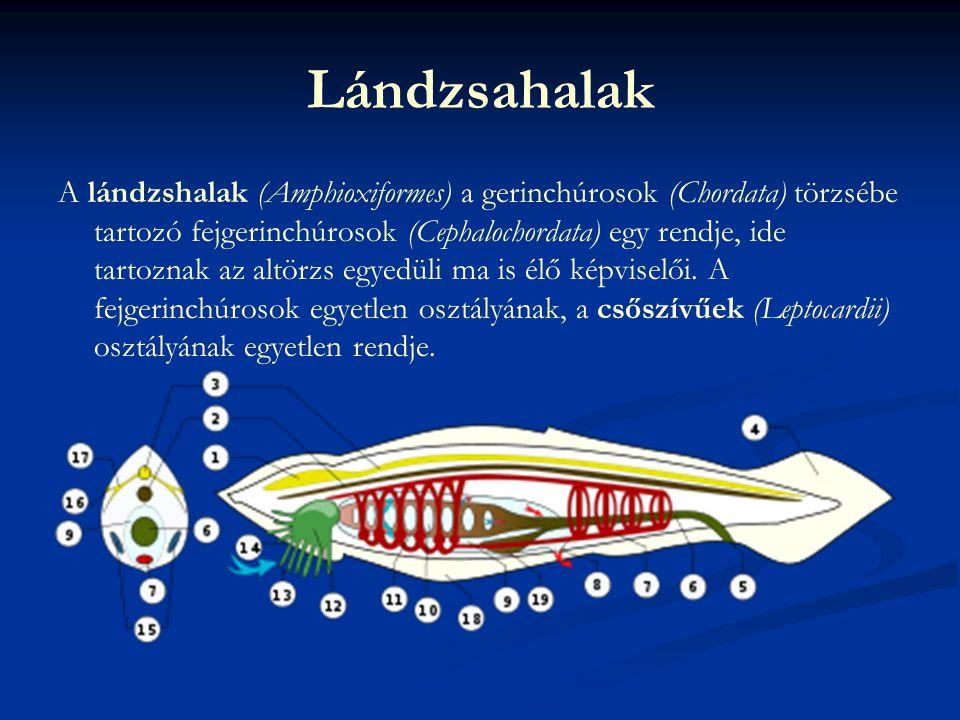 Vége Szerkesztette : Patyi Gábor 6./4 2010.02.26.