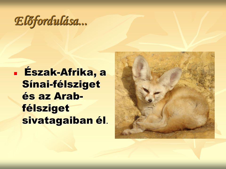 Előfordulása... Észak-Afrika, a Sínai-félsziget és az Arab- félsziget sivatagaiban él. Észak-Afrika, a Sínai-félsziget és az Arab- félsziget sivatagai