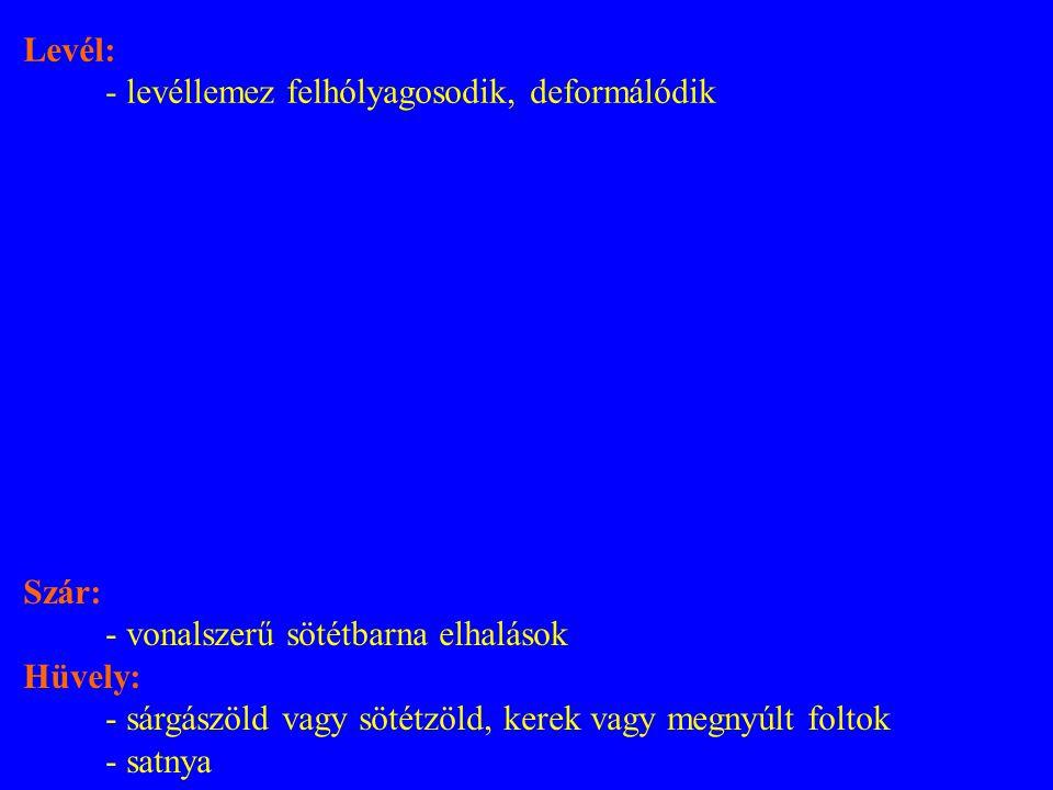 Szár: - vonalszerű sötétbarna elhalások Hüvely: - sárgászöld vagy sötétzöld, kerek vagy megnyúlt foltok - satnya Levél: - levéllemez felhólyagosodik, deformálódik