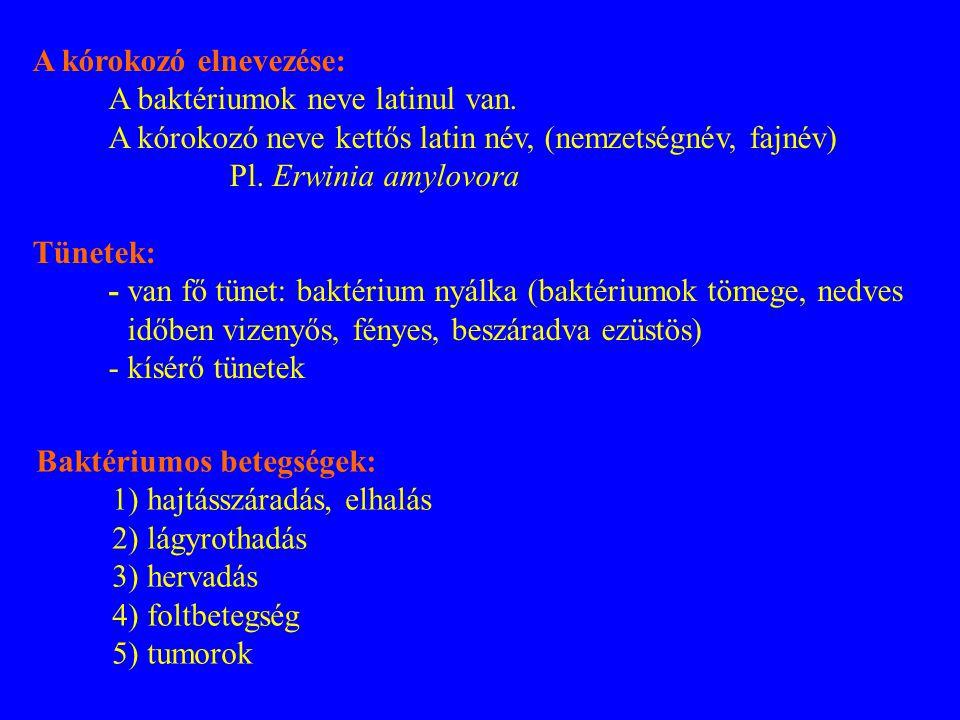A kórokozó elnevezése: A baktériumok neve latinul van. A kórokozó neve kettős latin név, (nemzetségnév, fajnév) Pl. Erwinia amylovora Tünetek: - van f