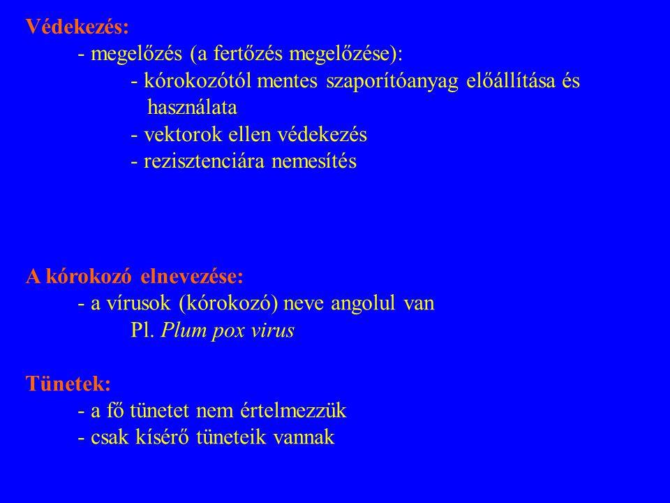 A kórokozó elnevezése: - a vírusok (kórokozó) neve angolul van Pl. Plum pox virus Tünetek: - a fő tünetet nem értelmezzük - csak kísérő tüneteik vanna
