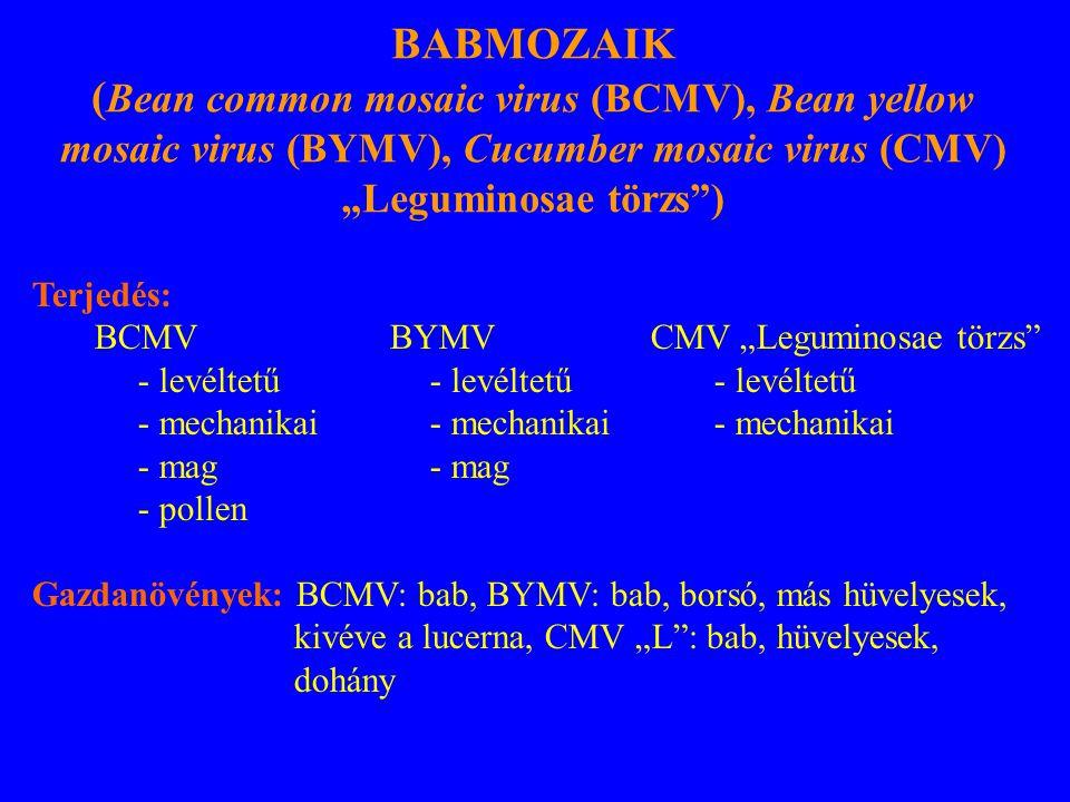 """Terjedés: BCMV BYMV CMV """"Leguminosae törzs - levéltetű - levéltetű - levéltetű - mechanikai - mechanikai- mechanikai - mag - pollen Gazdanövények: BCMV: bab, BYMV: bab, borsó, más hüvelyesek, kivéve a lucerna, CMV """"L : bab, hüvelyesek, dohány BABMOZAIK ( Bean common mosaic virus (BCMV), Bean yellow mosaic virus (BYMV), Cucumber mosaic virus (CMV) """"Leguminosae törzs )"""