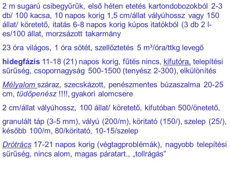 2 m sugarú csibegyűrűk, első héten etetés kartondobozokból 2-3 db/ 100 kacsa, 10 napos korig 1,5 cm/állat vályúhossz vagy 150 állat/ köretető, itatás