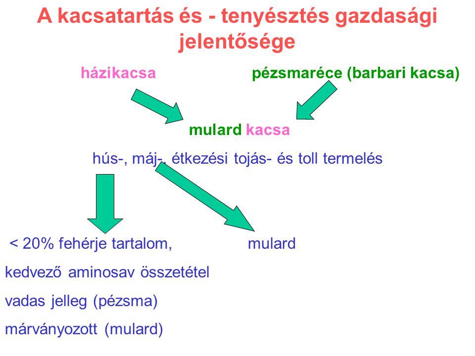 A kacsatartás és - tenyésztés gazdasági jelentősége házikacsa pézsmaréce (barbari kacsa) mulard kacsa hús-, máj-, étkezési tojás- és toll termelés < 2