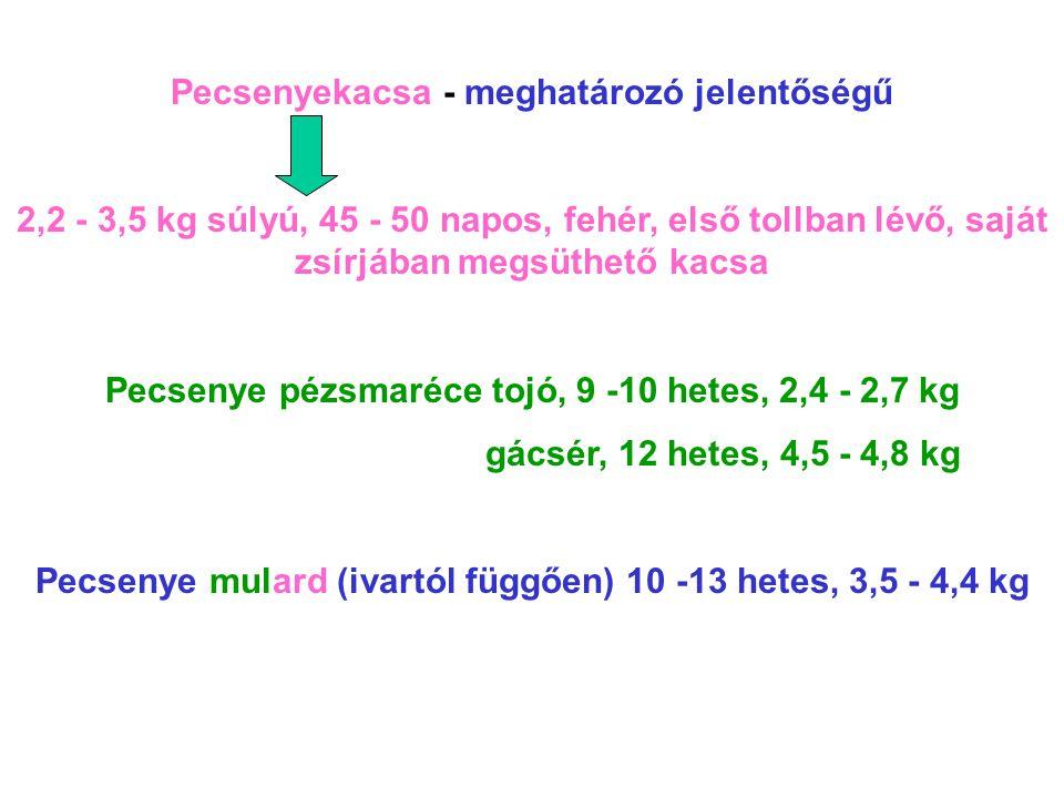 Pecsenyekacsa - meghatározó jelentőségű 2,2 - 3,5 kg súlyú, 45 - 50 napos, fehér, első tollban lévő, saját zsírjában megsüthető kacsa Pecsenye pézsmar