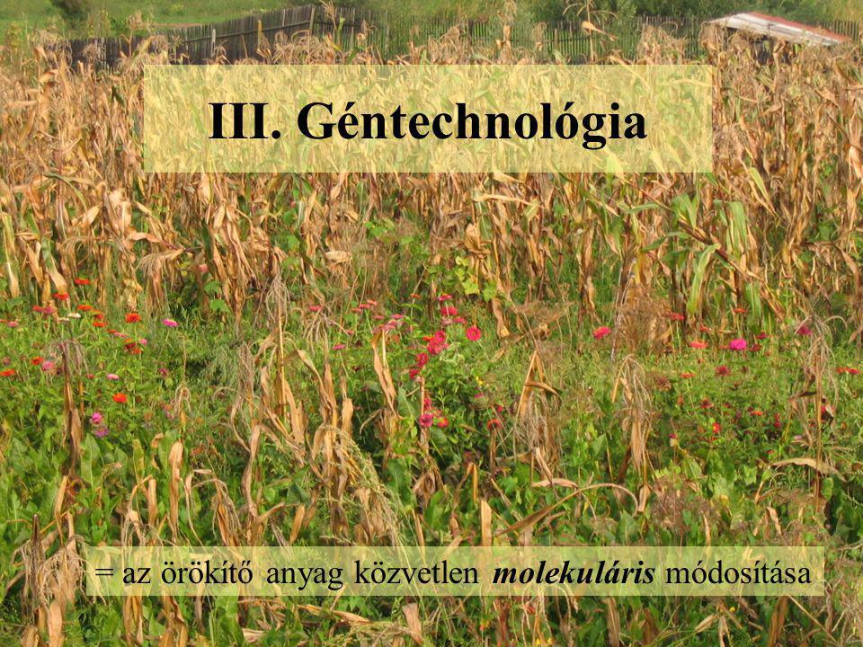 III. Géntechnológia = az örökítő anyag közvetlen molekuláris módosítása