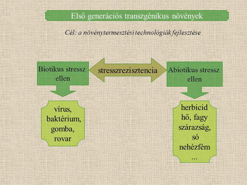 Második generációs transzgénikus növények Cél: a termékek minőségének javítása Élettani folyamatok módosítása Anyagcsere módosítása Fejlődés módosítása Fehérje, zsírsav, szénhidrát Pigment Alkaloida...