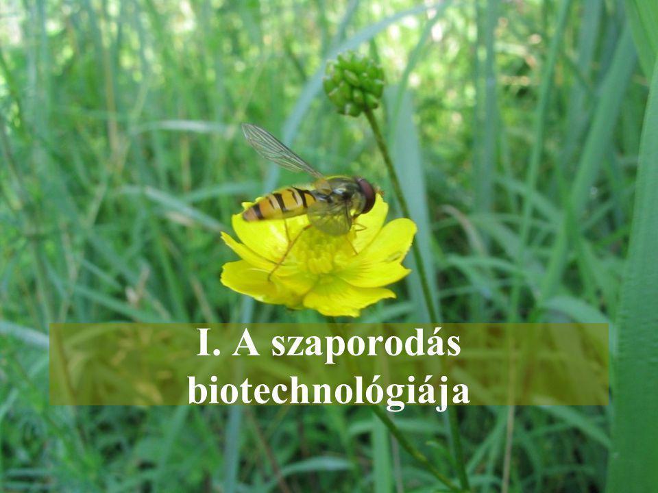 """Mesterséges táptalajon, steril tenyésztési feltételek közt különböző növényi sejtekből, szövetekből egész növényt lehet előállítani Széleskörű felhasználás –Mikroszaporítás – nagyszámú, vírusmentes növény –Haploid növények előállítása – beltenyésztett vonalak gyors(abb) előállítása –Minden egyes """"fejlettebb biotechnológiai eljárás feltételezi, hogy a növény szövettenyészetben való szaporítása már megoldott!."""
