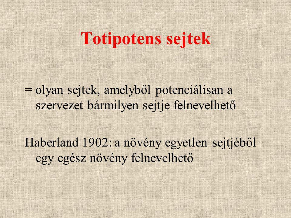Totipotens sejtek = olyan sejtek, amelyből potenciálisan a szervezet bármilyen sejtje felnevelhető Haberland 1902: a növény egyetlen sejtjéből egy egész növény felnevelhető