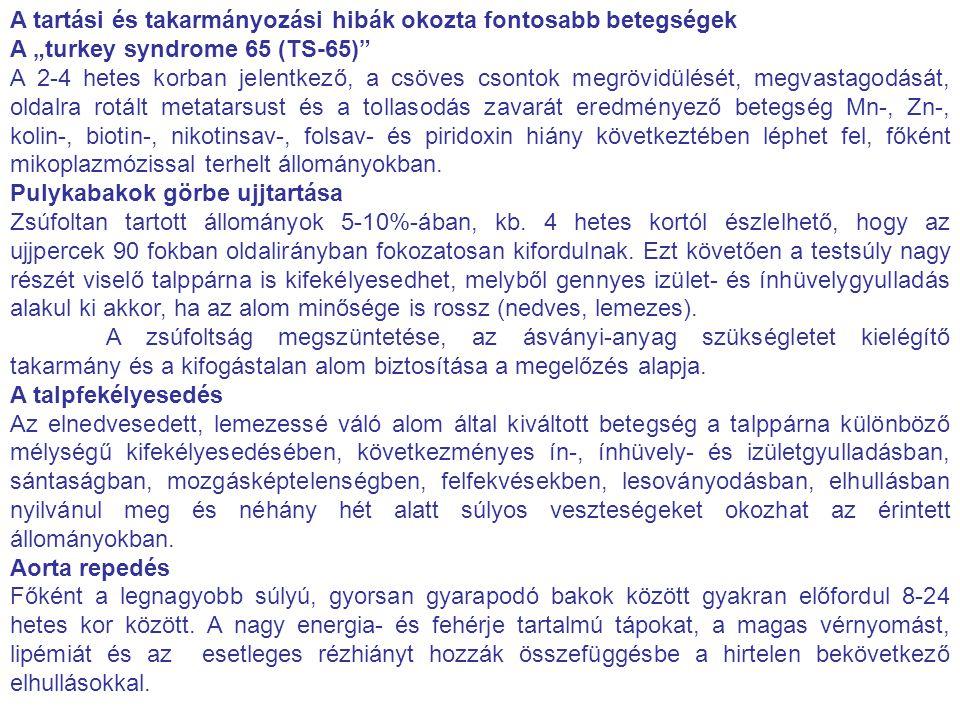 """A tartási és takarmányozási hibák okozta fontosabb betegségek A """"turkey syndrome 65 (TS-65)"""" A 2-4 hetes korban jelentkező, a csöves csontok megrövidü"""