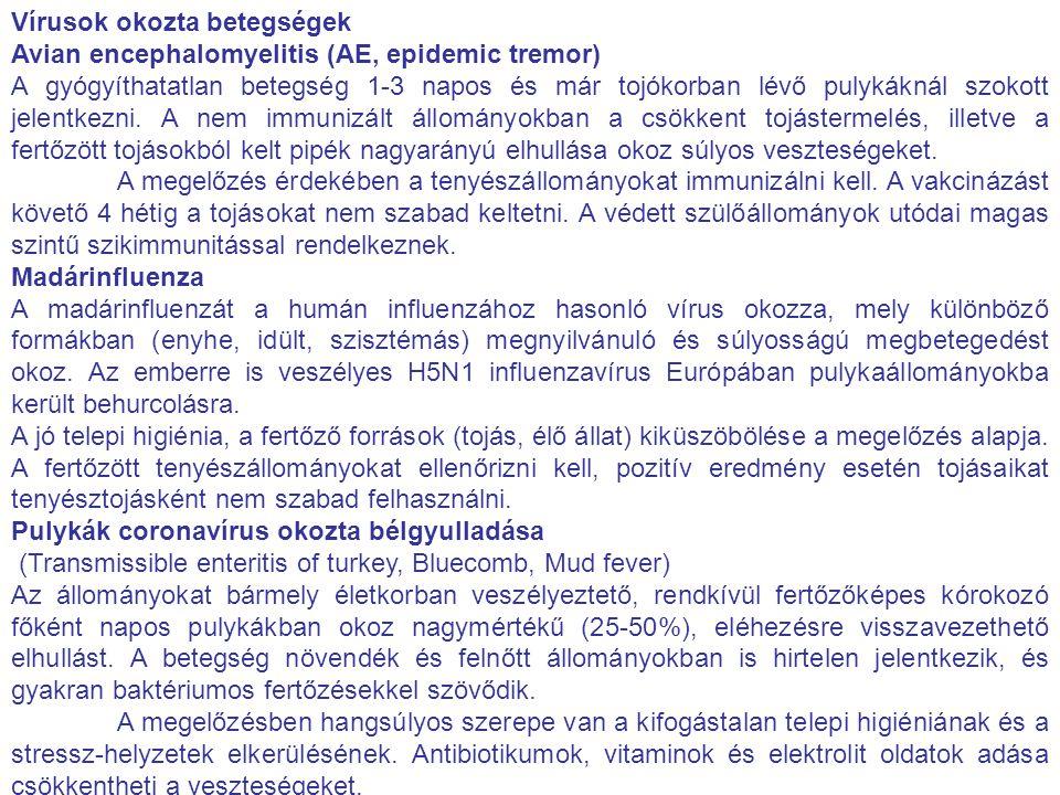 Vírusok okozta betegségek Avian encephalomyelitis (AE, epidemic tremor) A gyógyíthatatlan betegség 1-3 napos és már tojókorban lévő pulykáknál szokott