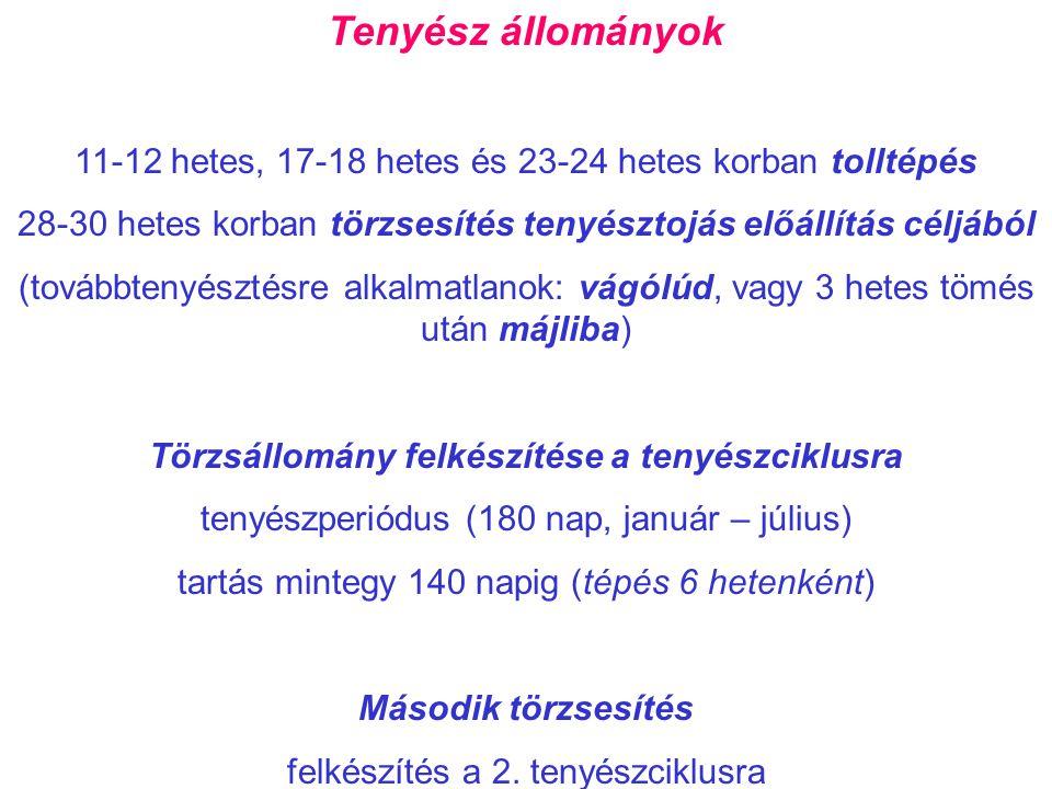 Tenyész állományok 11-12 hetes, 17-18 hetes és 23-24 hetes korban tolltépés 28-30 hetes korban törzsesítés tenyésztojás előállítás céljából (továbbten