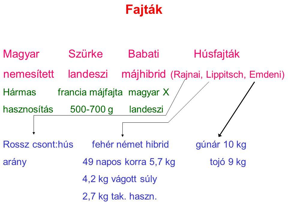 Fajták Magyar Szürke Babati Húsfajták nemesített landeszi májhibrid (Rajnai, Lippitsch, Emdeni) Hármas francia májfajta magyar X hasznosítás 500-700 g