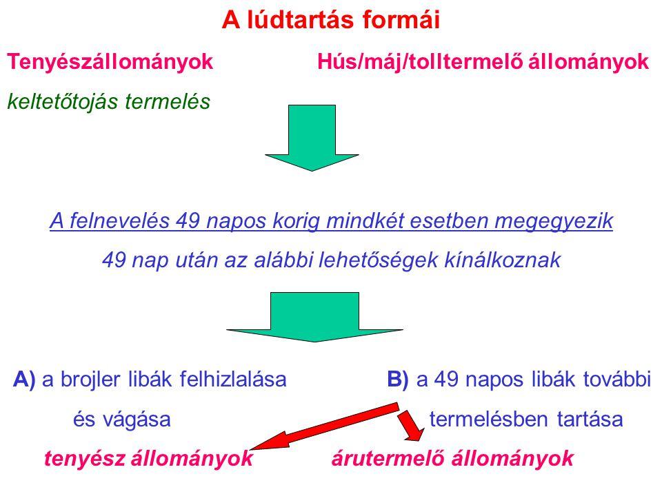 Tolltépés 32/ 1999.(III. 31.) FVM rendelet 5.