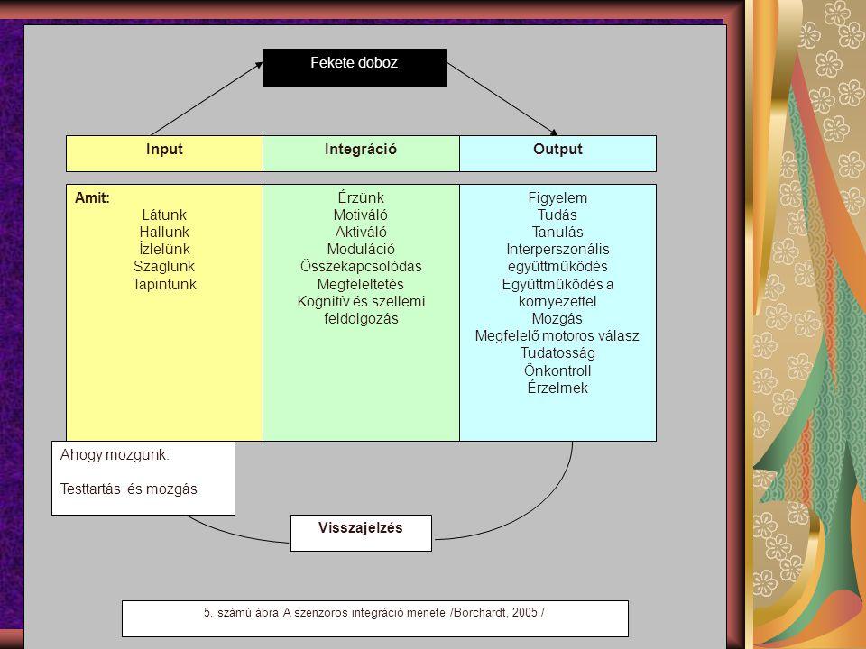 Fekete doboz InputOutputIntegráció Amit: Látunk Hallunk Ízlelünk Szaglunk Tapintunk Figyelem Tudás Tanulás Interperszonális együttműködés Együttműködés a környezettel Mozgás Megfelelő motoros válasz Tudatosság Önkontroll Érzelmek Érzünk Motiváló Aktiváló Moduláció Összekapcsolódás Megfeleltetés Kognitív és szellemi feldolgozás Ahogy mozgunk: Testtartás és mozgás Visszajelzés 5.