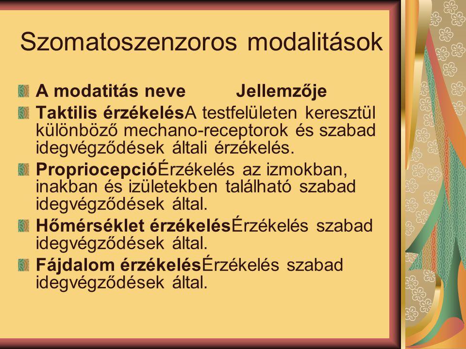 Szomatoszenzoros modalitások A modatitás neve Jellemzője Taktilis érzékelésA testfelületen keresztül különböző mechano-receptorok és szabad idegvégződ