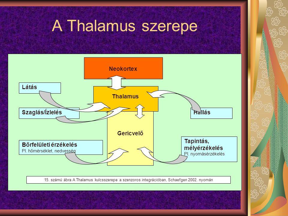 A Thalamus szerepe Neokortex Gericvelő Thalamus Látás Bőrfelületi érzékelés Pl. hőmérséklet, nedvesség Tapintás, mélyérzékelés Pl. nyomásérzékelés Hal