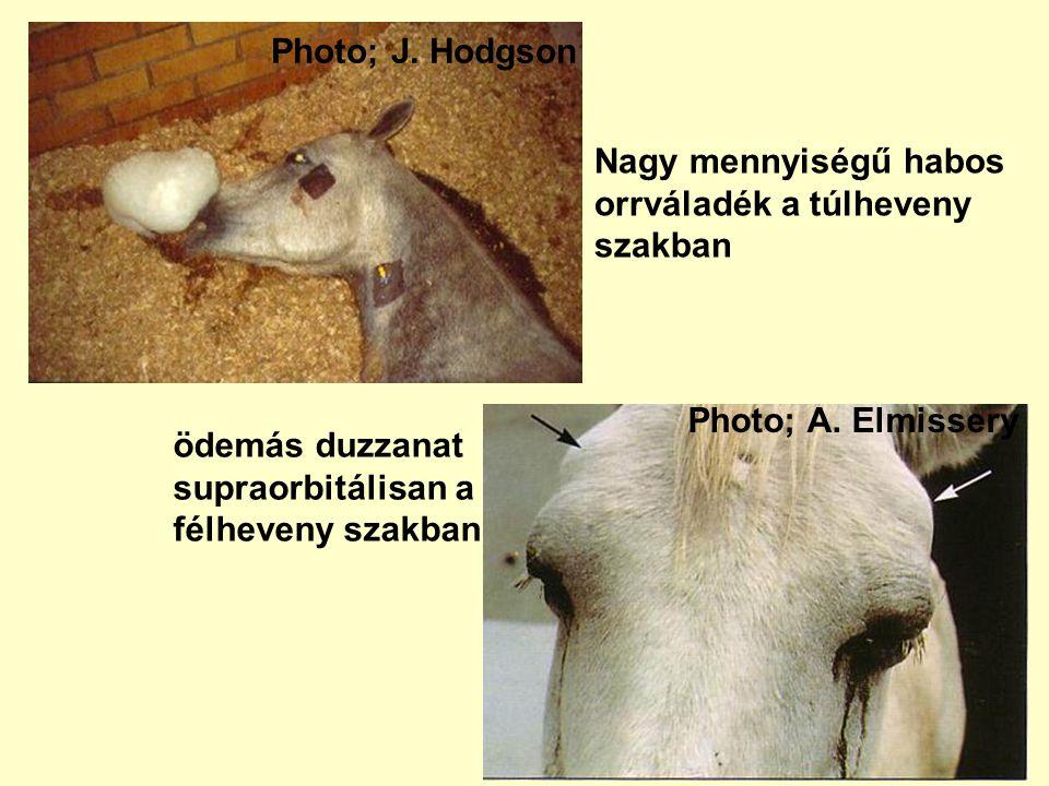 Photo; A. Elmissery ödemás duzzanat supraorbitálisan a félheveny szakban Nagy mennyiségű habos orrváladék a túlheveny szakban Photo; J. Hodgson