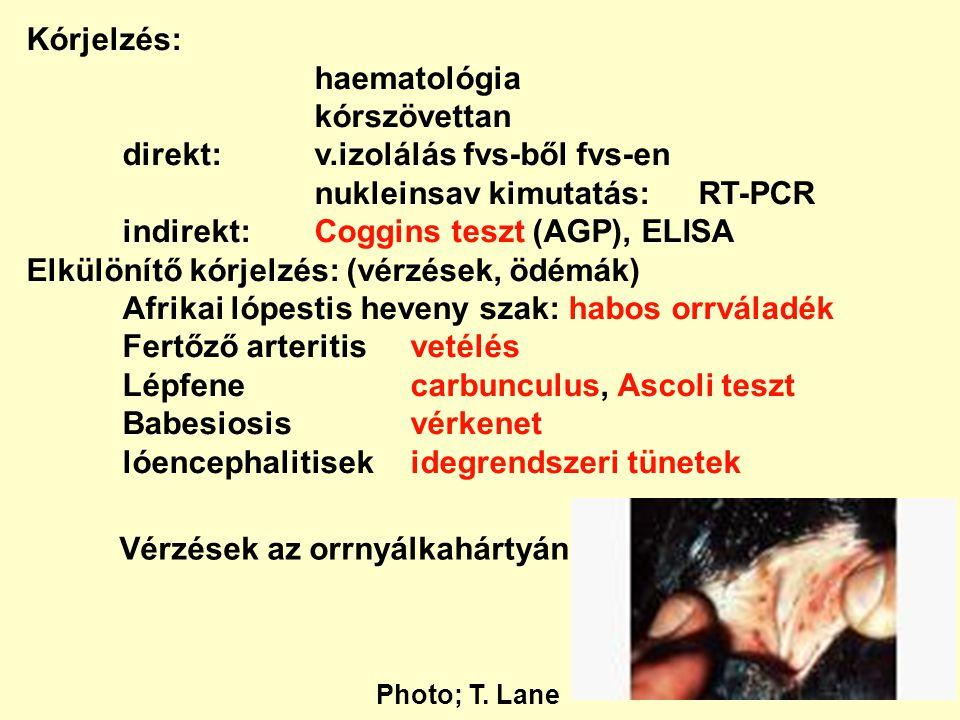 Kórjelzés: haematológia kórszövettan direkt:v.izolálás fvs-ből fvs-en nukleinsav kimutatás:RT-PCR indirekt:Coggins teszt (AGP), ELISA Elkülönítő kórje