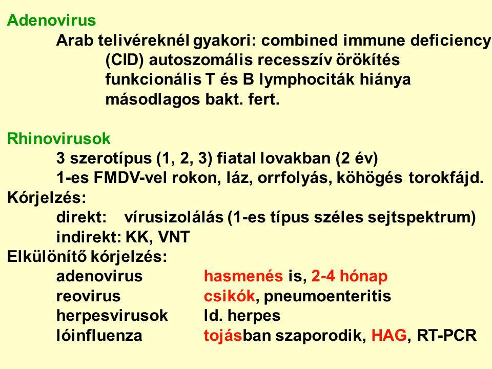Adenovirus Arab telivéreknél gyakori: combined immune deficiency (CID) autoszomális recesszív örökítés funkcionális T és B lymphociták hiánya másodlag