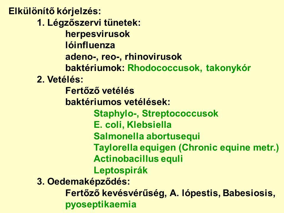 Elkülönítő kórjelzés: 1. Légzőszervi tünetek: herpesvirusok lóinfluenza adeno-, reo-, rhinovirusok baktériumok: Rhodococcusok, takonykór 2. Vetélés: F