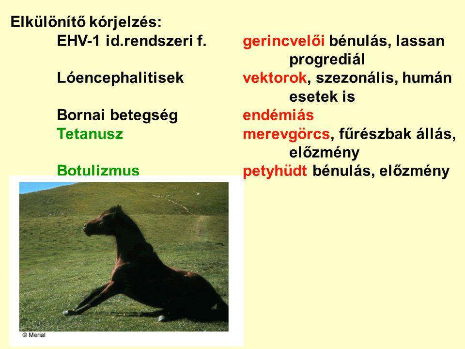 Elkülönítő kórjelzés: EHV-1 id.rendszeri f.gerincvelői bénulás, lassan progrediál Lóencephalitisekvektorok, szezonális, humán esetek is Bornai betegsé