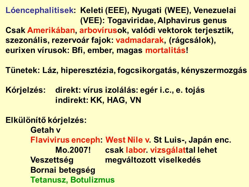 Lóencephalitisek:Keleti (EEE), Nyugati (WEE), Venezuelai (VEE): Togaviridae, Alphavirus genus Csak Amerikában, arbovírusok, valódi vektorok terjesztik