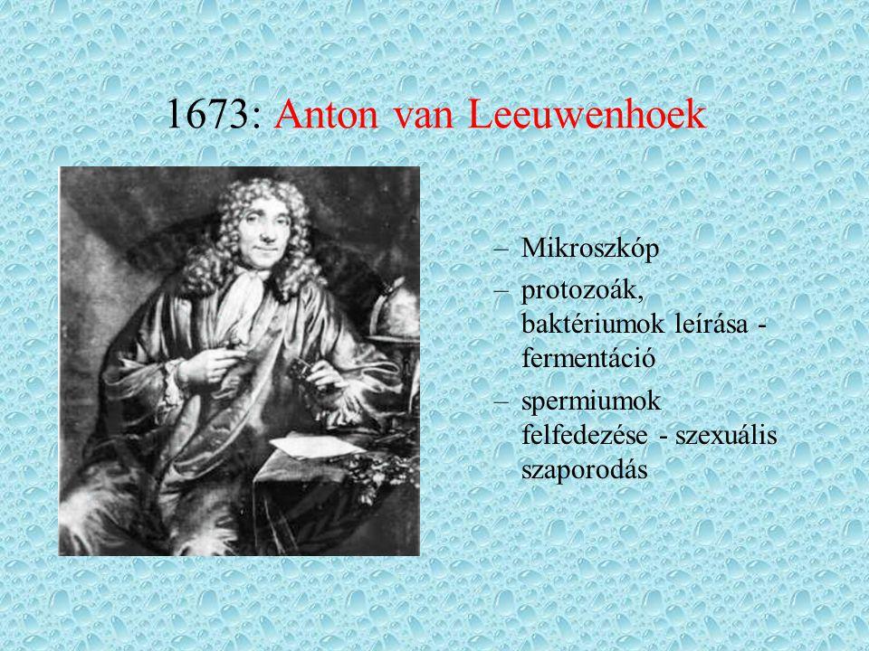 1673: Anton van Leeuwenhoek –Mikroszkóp –protozoák, baktériumok leírása - fermentáció –spermiumok felfedezése - szexuális szaporodás