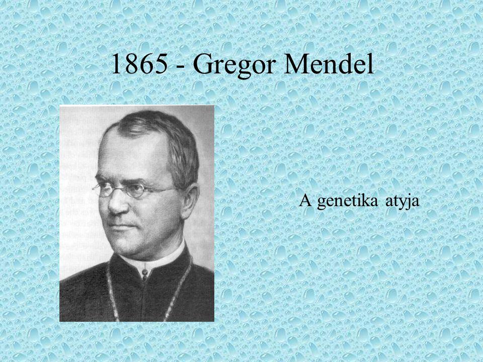 1865 - Gregor Mendel A genetika atyja
