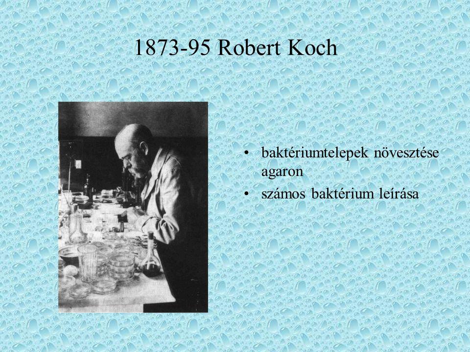 1873-95 Robert Koch baktériumtelepek növesztése agaron számos baktérium leírása