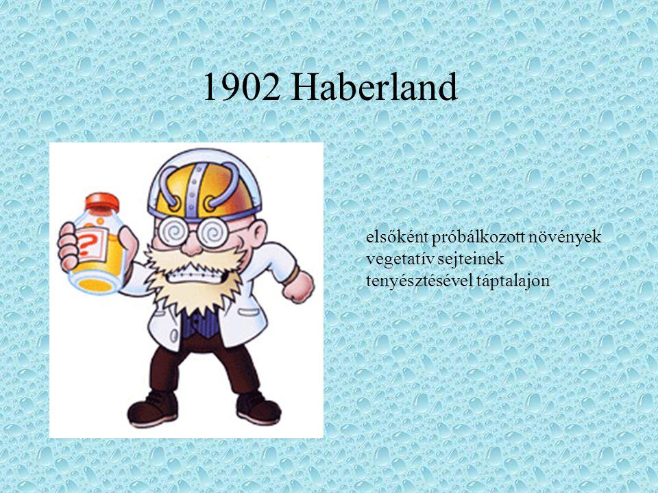 1902 Haberland elsőként próbálkozott növények vegetatív sejteinek tenyésztésével táptalajon