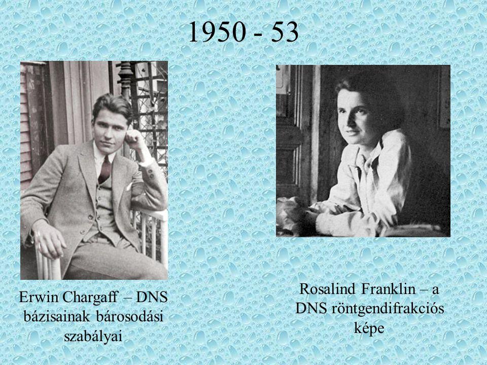 1950 - 53 Erwin Chargaff – DNS bázisainak bárosodási szabályai Rosalind Franklin – a DNS röntgendifrakciós képe