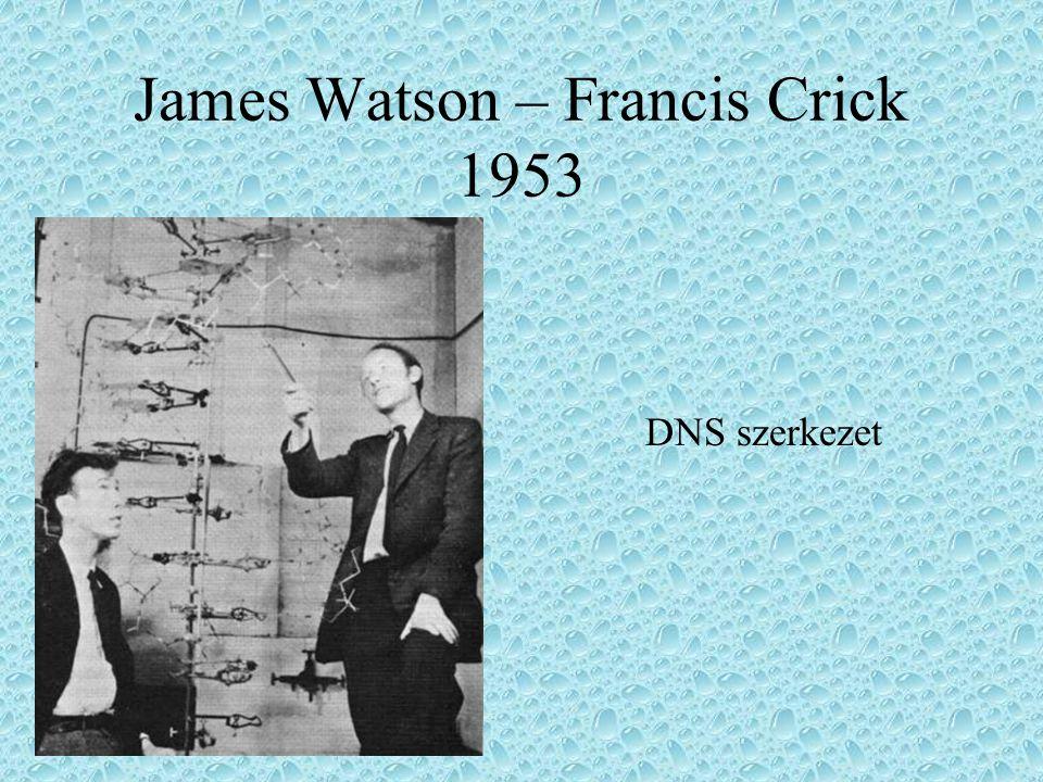 James Watson – Francis Crick 1953 DNS szerkezet