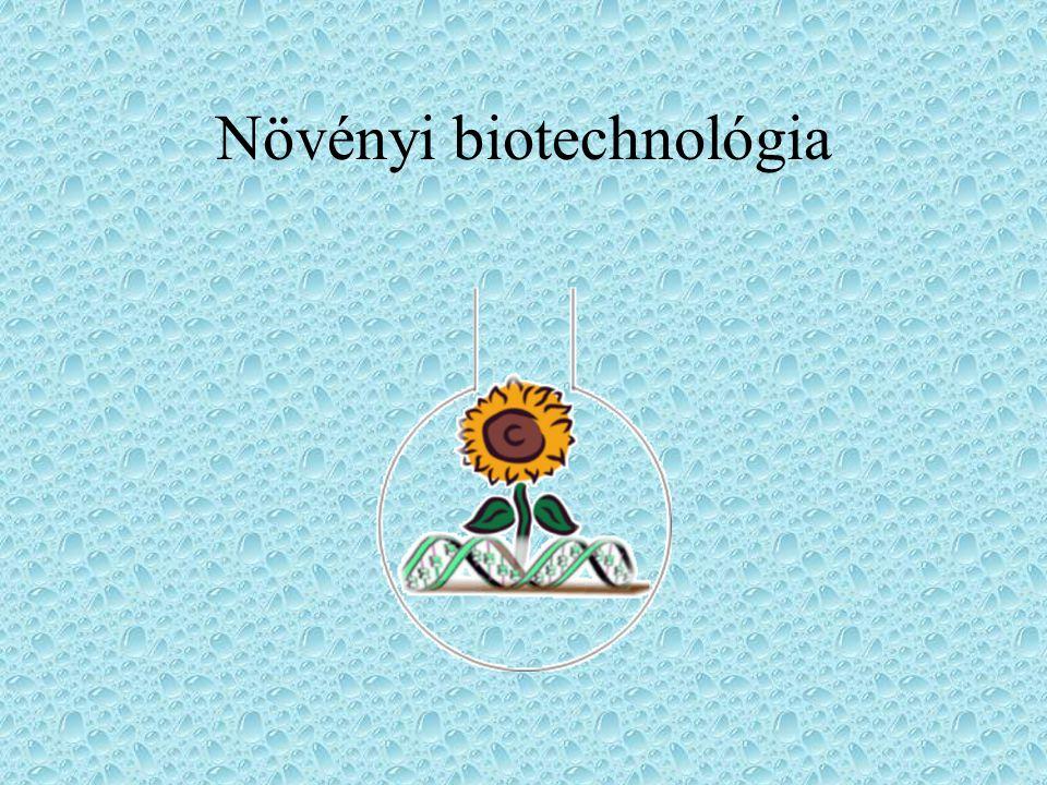 Növényi biotechnológia