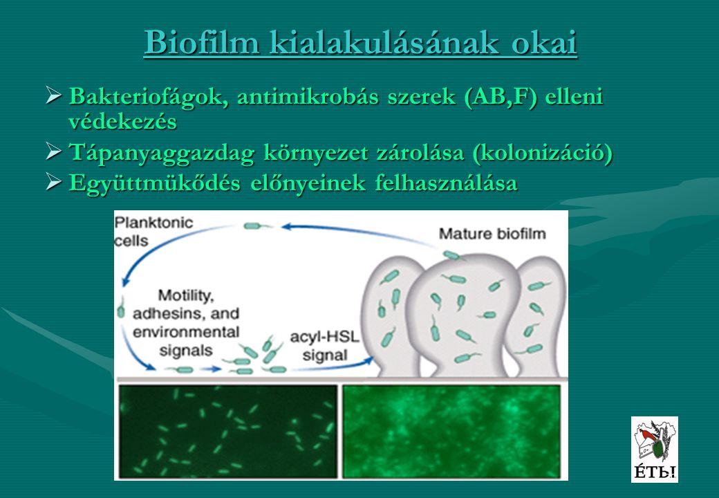 20 Biofilm kialakulásának okai  Bakteriofágok, antimikrobás szerek (AB,F) elleni védekezés  Tápanyaggazdag környezet zárolása (kolonizáció)  Együtt