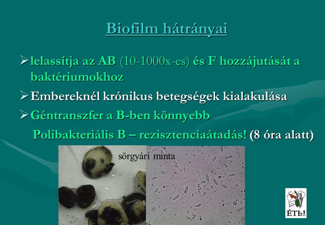 21 Biofilm hátrányai  lelassítja az AB (10-1000x-es) és F hozzájutását a baktériumokhoz  Embereknél krónikus betegségek kialakulása  Géntranszfer a