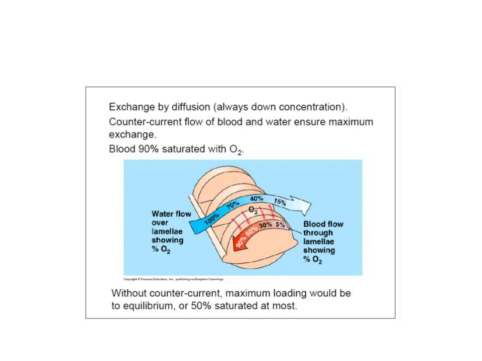 3.1.Kétéltűek légzése: a lárvális kopoltyúlégzést a kifejlett egyedeknél a tüdőlégzés váltja fel.