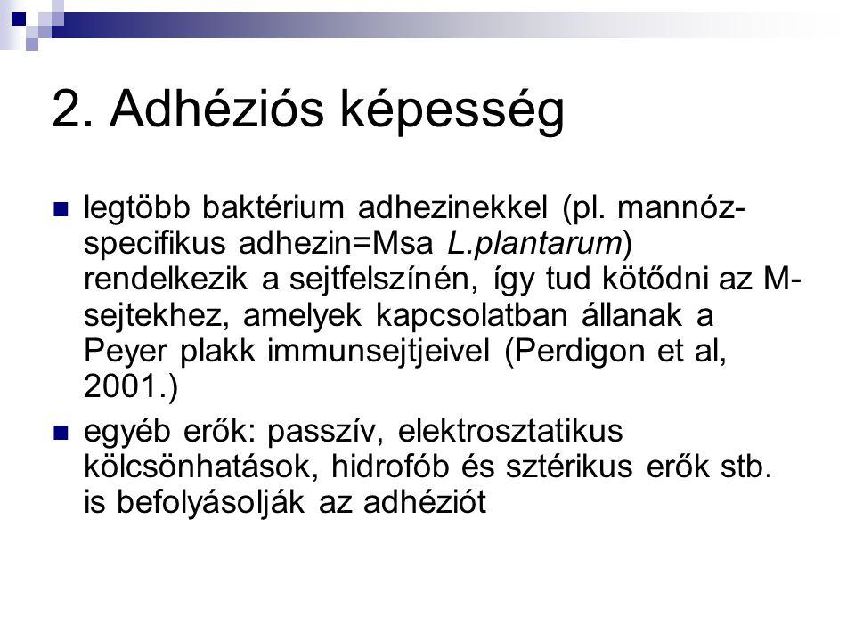 2. Adhéziós képesség legtöbb baktérium adhezinekkel (pl. mannóz- specifikus adhezin=Msa L.plantarum) rendelkezik a sejtfelszínén, így tud kötődni az M