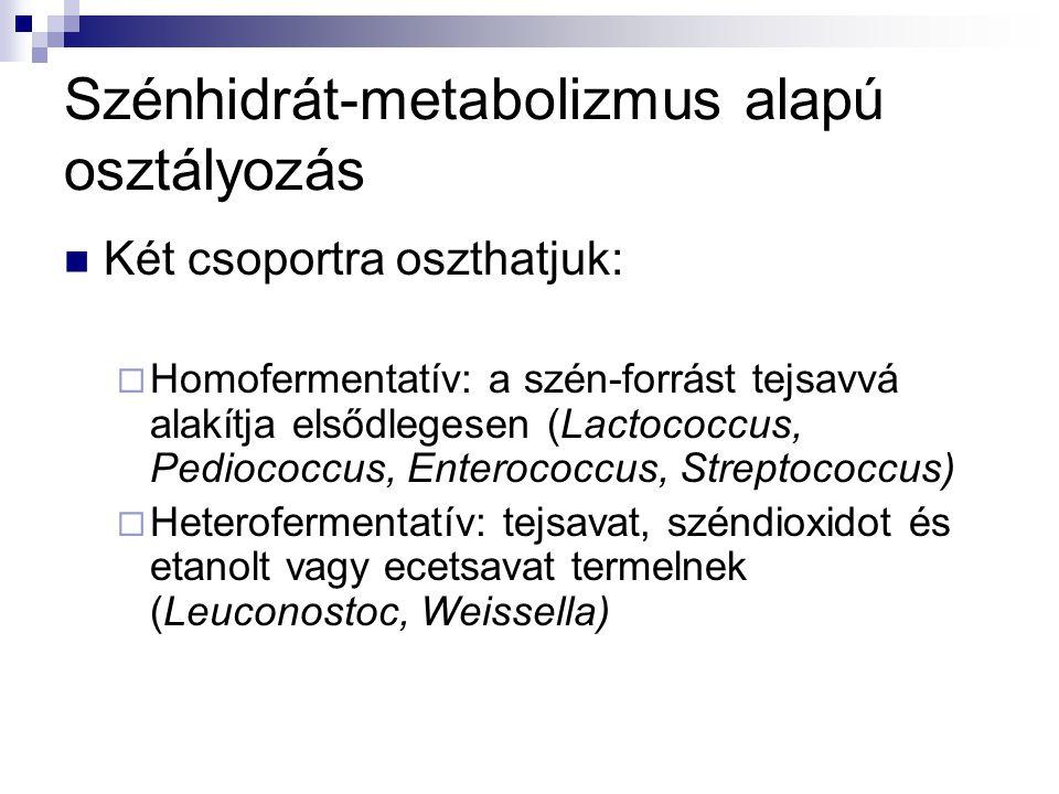 Szénhidrát-metabolizmus alapú osztályozás Két csoportra oszthatjuk:  Homofermentatív: a szén-forrást tejsavvá alakítja elsődlegesen (Lactococcus, Ped
