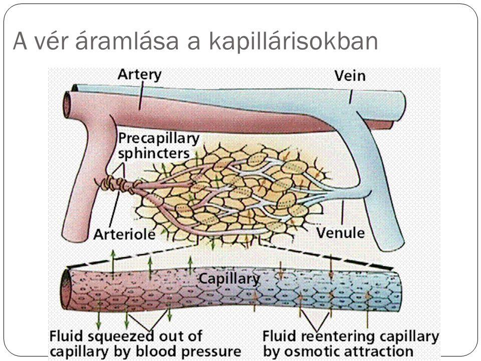 A vér áramlása a kapillárisokban