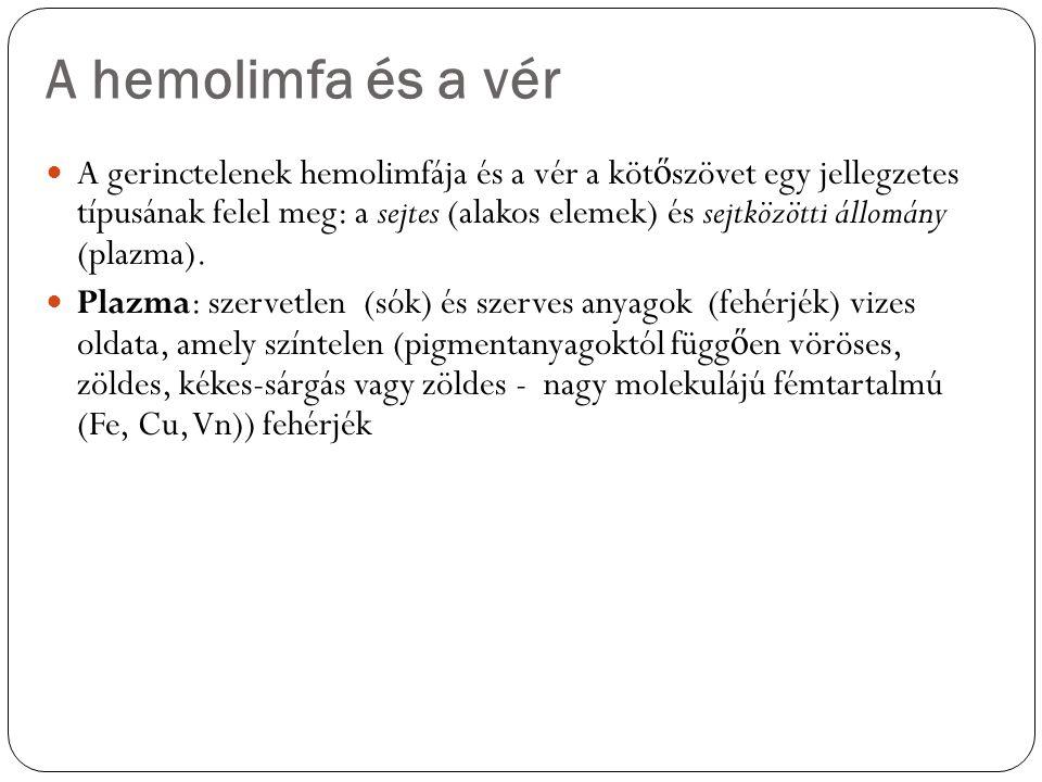A hemolimfa és a vér A gerinctelenek hemolimfája és a vér a köt ő szövet egy jellegzetes típusának felel meg: a sejtes (alakos elemek) és sejtközötti