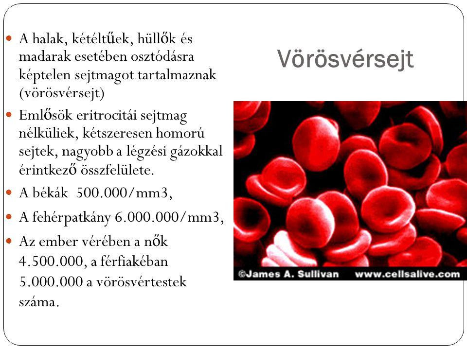 Vörösvérsejt A halak, kétélt ű ek, hüll ő k és madarak esetében osztódásra képtelen sejtmagot tartalmaznak (vörösvérsejt) Eml ő sök eritrocitái sejtma