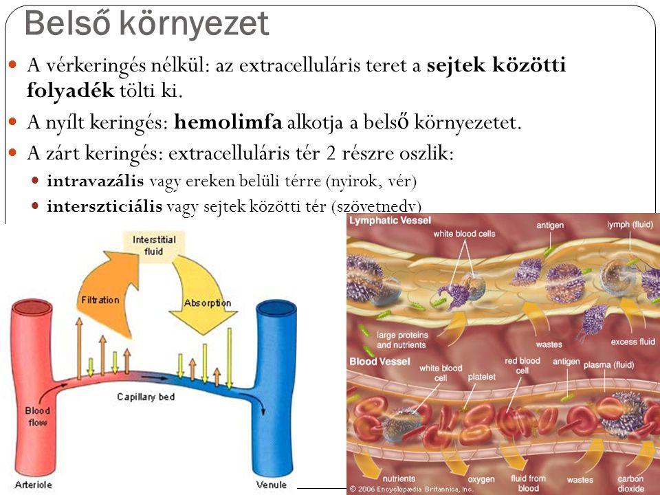 Belső környezet A vérkeringés nélkül: az extracelluláris teret a sejtek közötti folyadék tölti ki. A nyílt keringés: hemolimfa alkotja a bels ő környe