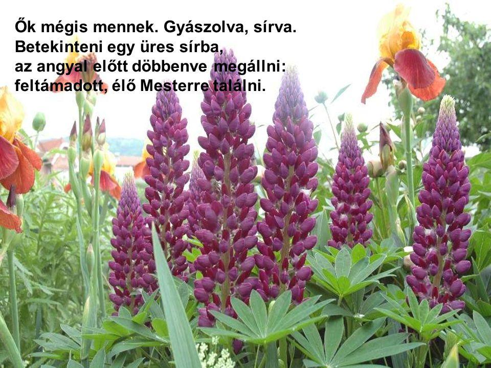 A virágok át harmatkönnyeken már látják felragyogni fényesen az élet napját, s azt hirdeti minden: A sírban nincsen! A sírban nincsen!